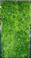 Green Wall Foliage Maiden Hair Square 1m x 1m