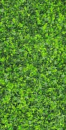 Green Wall Ivy Foliage Square 1m x 1m