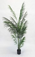 Potted Areca Palm 2.4m